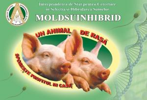 Complete feed for pigs and piglets on request