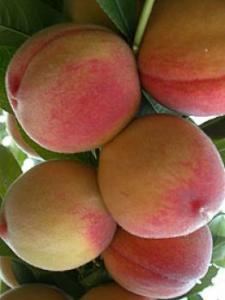 Персики коллинс в Молдове