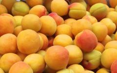 Apricot at the good price in Moldova