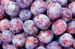 Cel mai bun pret la prune in Moldove