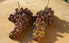Сорта винограда на продажу в Молдове