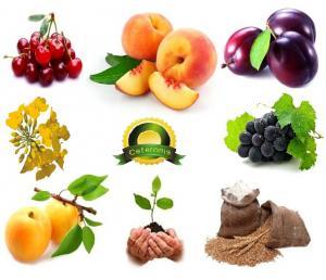 Cultivation of fruit, Ceteronis-ST, SRL