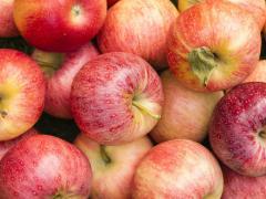Яблоки Гала в Молдове