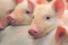 Свинина купить в Молдове