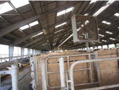 System of ventilation for cows in a cowshed