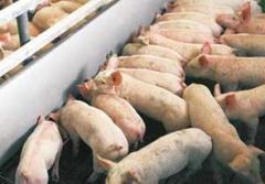 Клетки для свиней