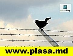 SIRMA GHIMPATA, EL ALAMBRE ESPINOSO, GARDURI, PLASA