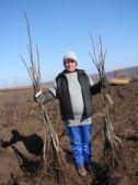 Саженцы грецкого ореха привитые в Молдове