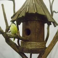 Nesting boxes, birds feeders wooden