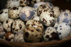 Eggs quail in Moldova