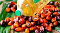 Продам масло пальмовое рафинированное, сырое
