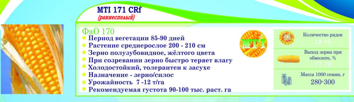 semena_kukuruzy_dlya_belorussii