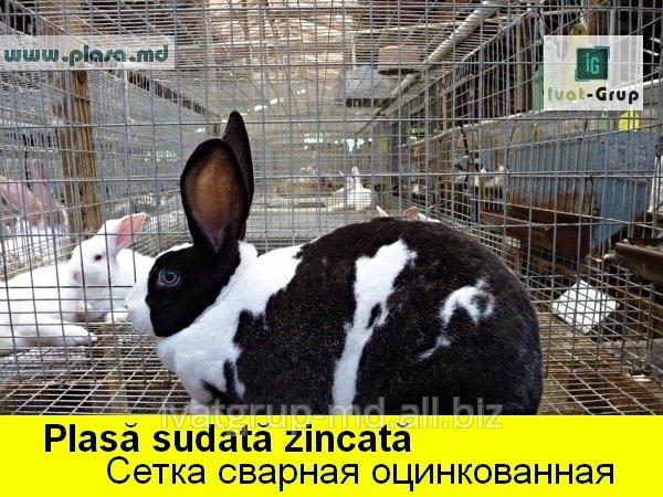 gard_n_moldova_evrozabory_v_moldove_zabory_s