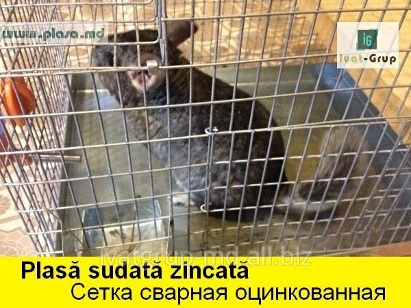 plasa_expandatagarduri_metalicesetka_prosechno