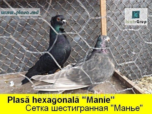 provoloka_kolyuchaya