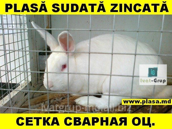 provoloka_kolyuchaya_sirma_ghimpata_zincata