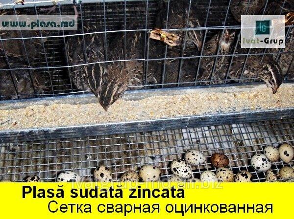 setka_svarnaya_ocinkovannaya