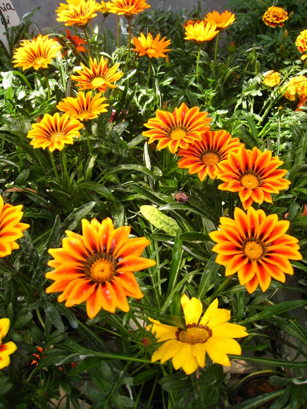 cvety_flori