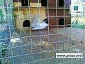 Plasa pentru gard  cu PVC.Сетка для заборов с ПВХ покрытием