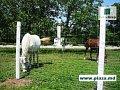 Столбы железобетонные для заборов.Сетка металлическая в Молдове.Plasa metalica in Moldova