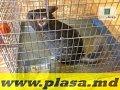Сетки сварные оцинкованные,plasa sudata zincata,plasa metalica in Moldova,сетка металлическая в Молдове