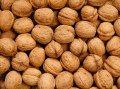 Walnut Moldova, walnut in Moldova, walnut sale, walnut export, walnut wholesale, the prices of walnut, walnut wholesale, walnut business, business walnut, all about walnut, walnut as business