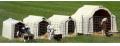 Домики для телят (Boxe pentru vitei)