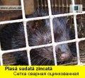 PLASA SUDATA ZINCATA PENTRU CONFECTIONAREA CUSTILOR PASARI,ANIMALE