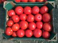 Patlagele, tomate