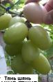 Саженцы винограда сорта Тянь шянь
