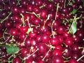 Абрикосы,черешня,персики,вишня,груша