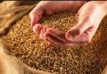 Зерновые культуры
