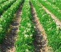 Довсходовый гербицид Superklin 480 SL