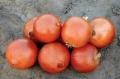 Семена лука репчатого ВалерО F1
