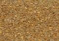 Семена озимой пшеницы Одесский 258