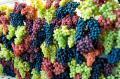 Виноград столовых сортов