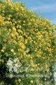 Цветы Lambton Park