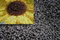 Пеллеты из семечки подсолнечника