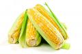 Кукуруза-Porumb