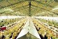 Комплекты оборудования для выращивания птицы