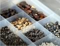 Семена подсолнечника и кукурузы