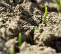 Протравители для предпосевной обработки семян