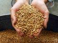 Weizen, Gerste, Mais, Sonnenblumen, Raps, Lein, Erbsen, Linsen, Kichererbsen, sorghum