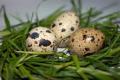 Egg quail table.