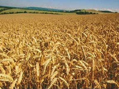 Заказать Услуги хранения сельскохозяйственных культур