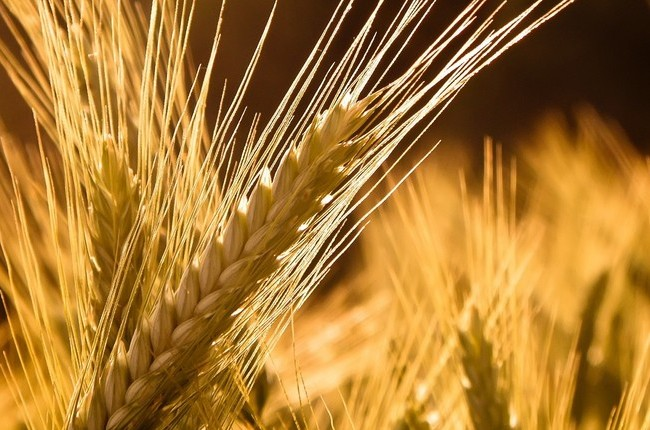 Order Cultivation of grain crops