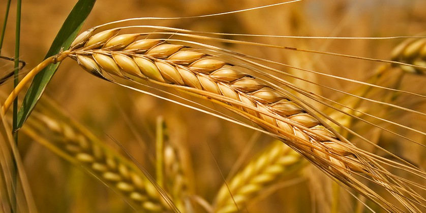 Заказать Сельскохозяйственные услуги
