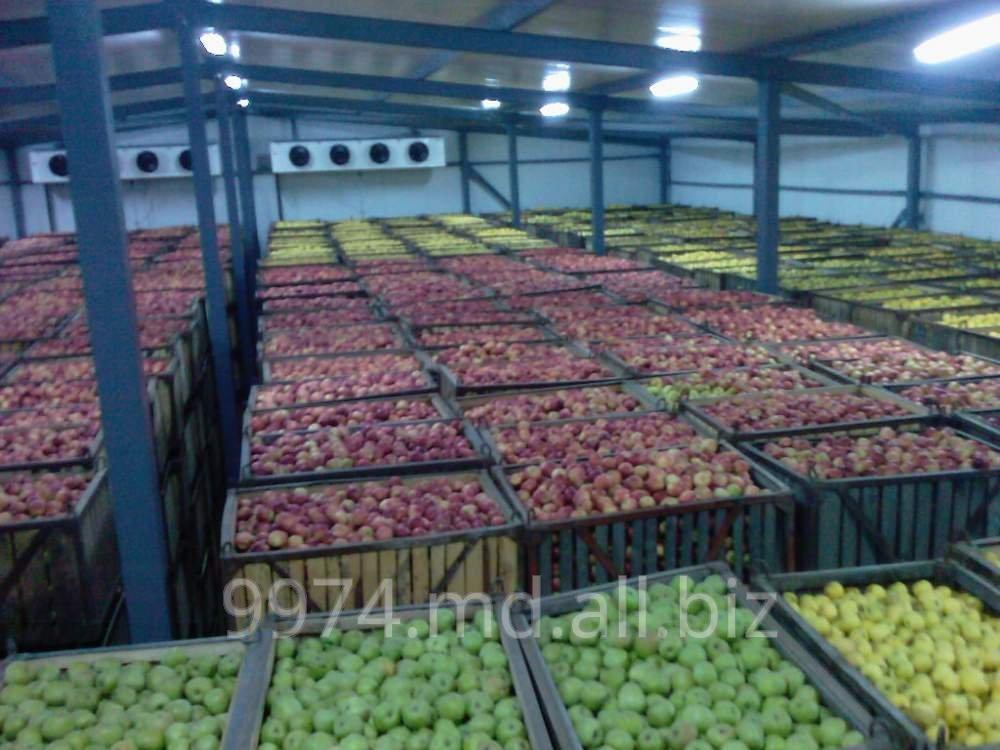 Заказать Яблоки свежие, сливы на экспорт