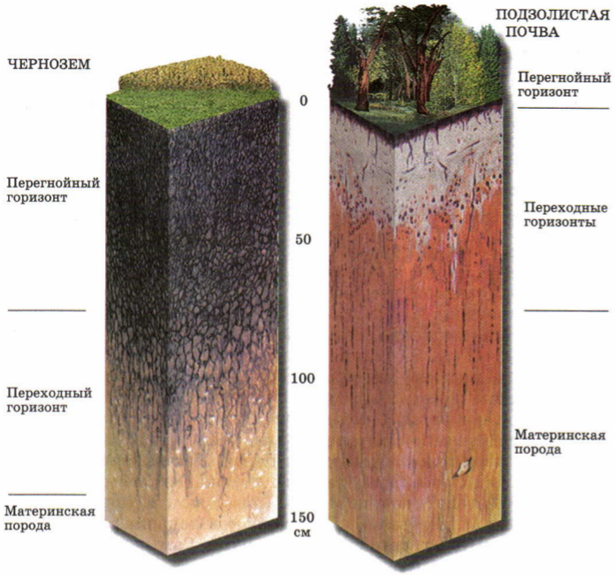 Подготовка почвы к посадке сада