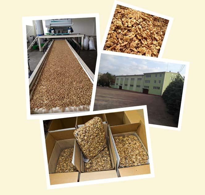 Заказать Переработка и реализация орехов